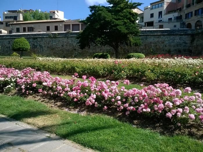Lumia-1320-camara-flores