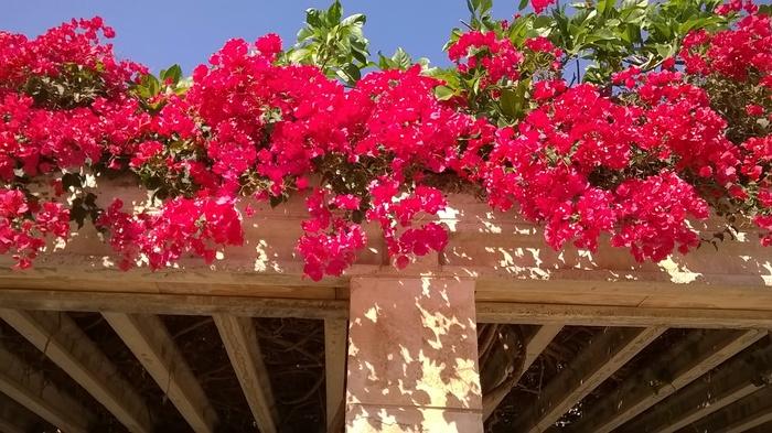 Lumia 530 test camara flores