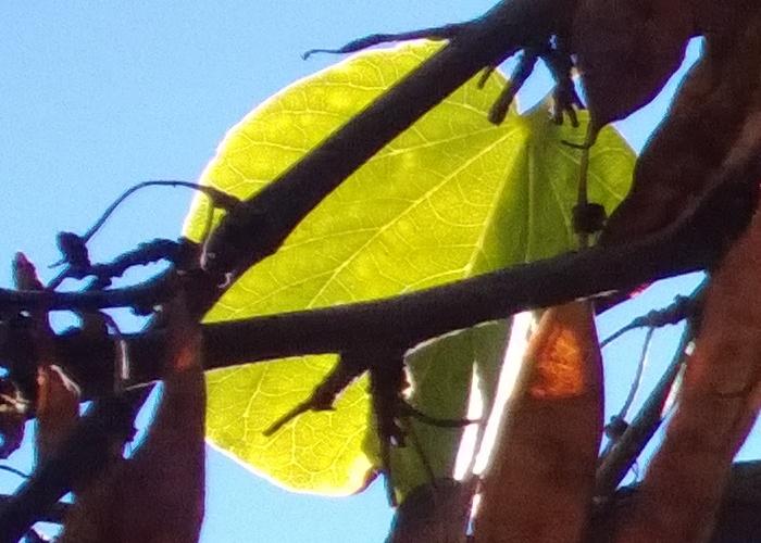nokia lumia 1020 foto 3 ampliacion
